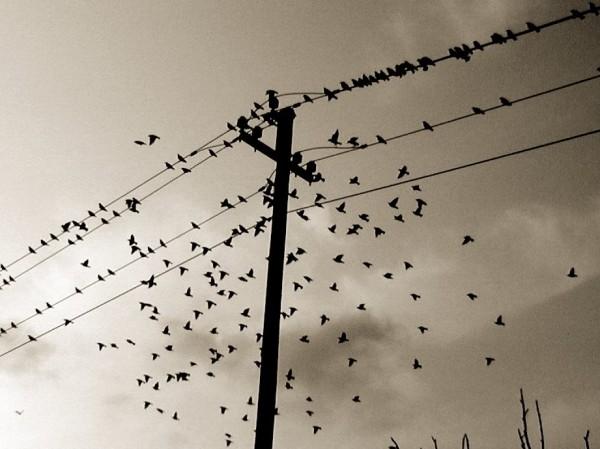 Birds, cc by-nc-sa 2.0 Geir Halvorsen